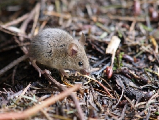 Signs You Should Call a Mice Exterminator